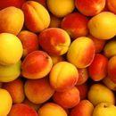 Се укинува забраната за извоз на коскесто овошје во Русија