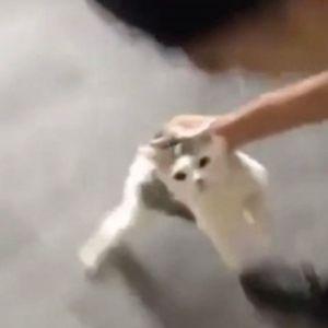 Ужасна снимка на двајца мажи кои се изживуваат врз маче