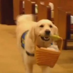 Кучето Бени има многу тешка работа