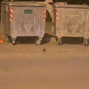 Видео: Огромен стаорец во центарот на Скопје