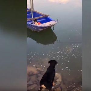 Куче скокна во река за да го спаси своето другарче