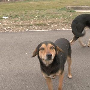Кучиња скитници – проблем за кој само се зборува