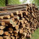 """Девет """"дрвокрадци"""" oд Кичево, лишени од слобода"""