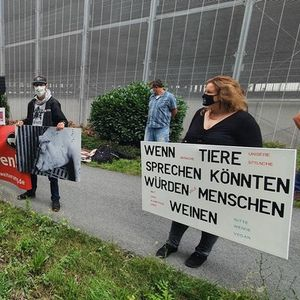 Протести пред најголемата германска кланица , каде што работат и македонски граѓани