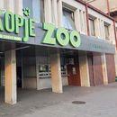 Принова во ЗОО Скопје: Прв пат се роди џуџесто мајмунче