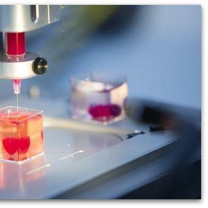 На луѓето ќе им се пресадува 3D печатено срце | Видео