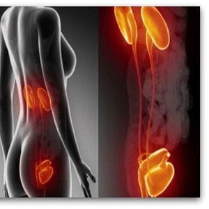 Еве што се случува во организмот ако не одите во тоалет | Видео