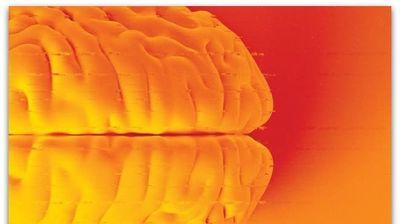 Оживеани делови од мозоци на заклани свињи