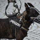 Косовски Албанец приведен со 11 килограми хероин, откако го намирисале кучињата