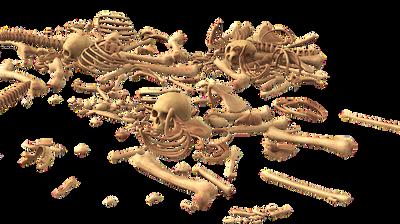 Откриен нов предок на човекот од пред 12 милиони години