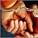 Уапсени девет лица од Кичево поради нелегална сеча на дрва