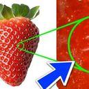 Повеќе нема да ви падне на памет да јадете јагоди пред да ги измиете- ова го има во нивните дупчиња