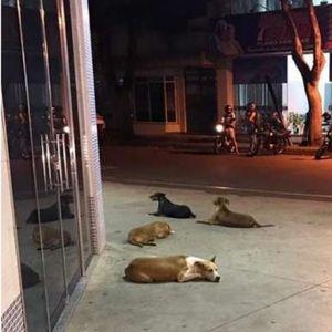 Бездомник заврши во болница: Погледнете што направија неговите пријатели – кучињата скитници (ВИДЕО)