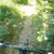 Мечки се појавија пред велосипедисти на Шар Планина, погледнете како се спасиле (ВИДЕО)