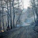 Се испитува дали пожарот на Евија е подметнат- земени изјави од 25 очевидци