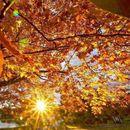 Пред прагот на есента: 5 работи што треба да се направат на есенската рамноденица