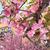 Општина Центар ги исече јапонските цреши во центарот на Скопје, револтот кај граѓаните се повеќе расте (ФОТО)