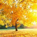 Најнова студија открива: Сончевата светлина ја деактивира корната!