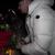 Фановите бесни: Популарниот Јутјубер призна дека ја лажирал смртта на неговата девојка (ВИДЕО)