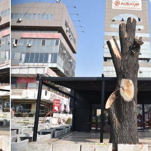 """Среде Скопје се сечат дрва, а Шилегов """"не знаел"""" кој е: Граѓаните со потсмев за најавата дека ќе се казни """"непознат"""" сторител (ФОТО)"""