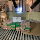Со помош на куче трагач откриени се 70 килограми кокаин во контејнер со банани во Грција