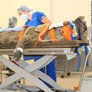 Крокодил тежок 154 килограми немало да остане жив поради патики (ВИДЕО)