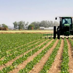 Спроведената анкета на Здружението на граѓани – ЗОЗГ, ни укажува дека младите во Македонија не би се занимавале со земјоделство
