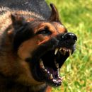 Нов напад од куче скитник во Скопје