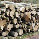 Двајца кичевчани добија кривична поради бесправна сеча на дрва