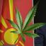 Нов канабис скандал ги тресе Заеви: Лиценца за марихуана  доби идниот зет на Заев