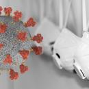 """Обичната настинка може да го """"подготви"""" имунолошкиот систем за Ковид-19"""
