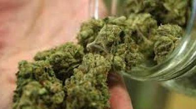 Легализацијата на марихуаната може да се покаже како неуспех?
