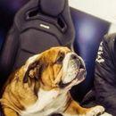 Кучето на Хамилтон заработува 700 долари дневно