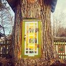 Жена претвори старо дрво во библиотека