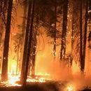 Постојат две главни верзии на пожарот на грчкиот остров Евија