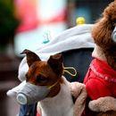 Сопствениците на домашните миленичиња за време на полицискиот час ќе може да ги шетаат во востановените термини