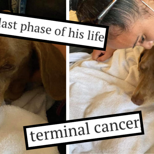 One Last Chance: This Terminally-Ill Dog In Malta Needs A Loving Home For His Final Months