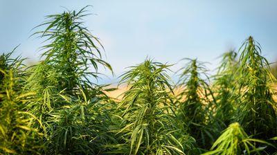 Најголема заплена на марихуана во историјата на Шпанија
