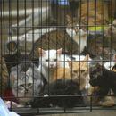 Спасени 300 мачки и 7 кучиња од пожар во Русија