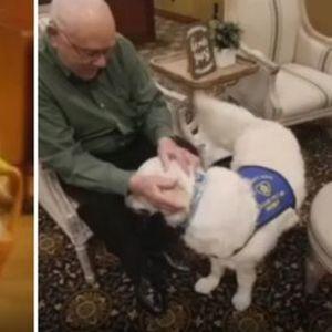 Тригодишното куче Бени ги теши ужалените на погреби
