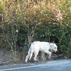 Куче во Грција 18 месеци не се трга од местото каде починал неговиот газда