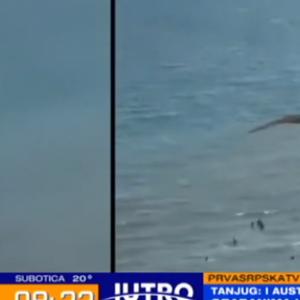 Неверојатна сцена: Орел грабна ајкула