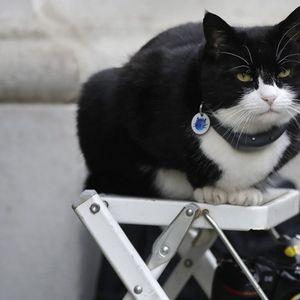 """Црно-белиот мачор од """"Даунинг стрит"""" оди во пензија"""