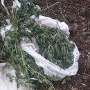 Скриле дрога во грмушка на патот за Струга – полицијата ги фатила