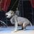 Франција забранува диви животни во циркусите и делфини и орки во морските паркови