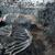 Во Тајланд откриен скелет на кит стар меѓу 3.000 и 5.000 години