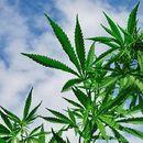 Кривична пријава за затвореник во КПД Штип за продажба на марихуана