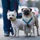 Остануваат во важност истите термини за шетање на домашни миленичиња за време на празничниот полициски час