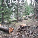 За 5% намалено производството на шумски производи