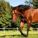 Поради вознемиреност од невреме, коњ одгледуван во домашни услови нанел повреди на 8 годишно дете, мајката заработи кривична пријава